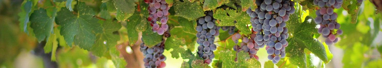 Vin de pays du Périgord, Domaine de la Vitrolle à Limeuil (24)
