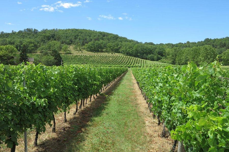 Vignes Domaine de la Vitrolle vin de pays du Périgord