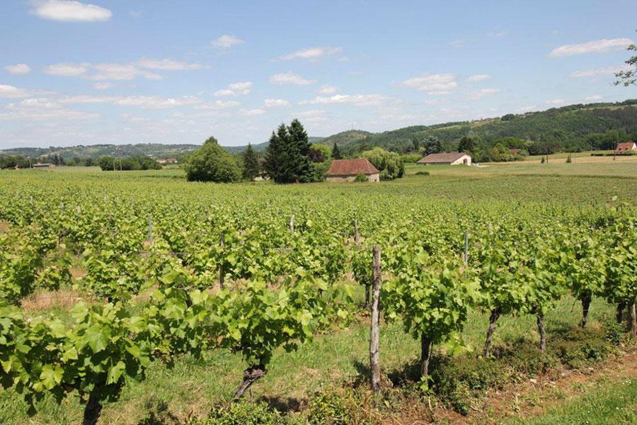 Vignes et vignoble du Domaine de la Vitrolle vin de pays du Périgord