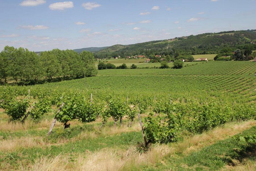 Vignoble Domaine de la Vitrolle vin de pays du Périgord