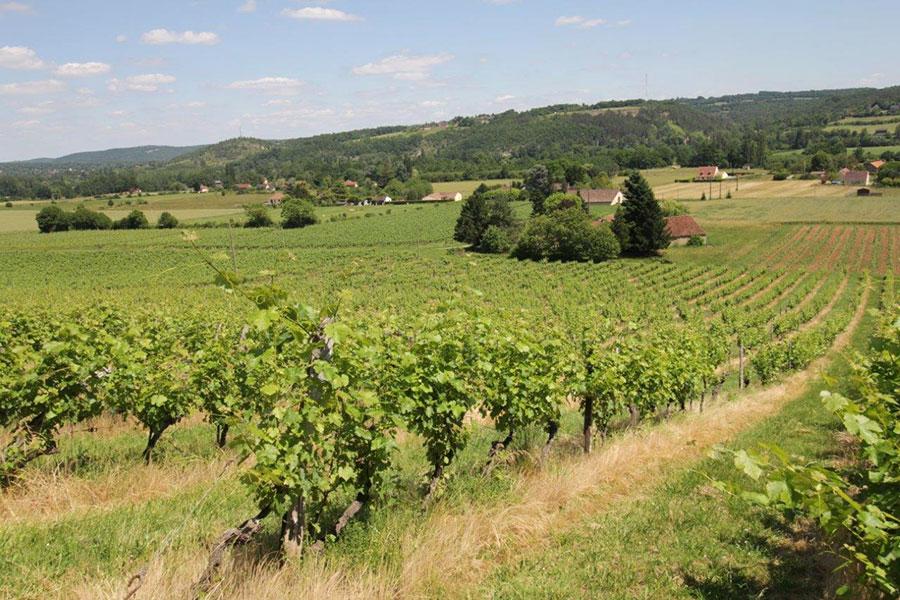 Vignoble et vignes du Domaine de la Vitrolle Vin de pays du Périgord